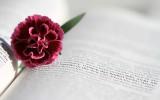 Las novelas románticas más vendidas de mayo de 2017