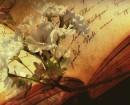 Novelas románticas que rinden homenaje a Jane Austen