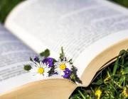 Los clichés de la Novela Romántica