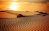 Serie Jeques del desierto, de Susan Mallery