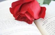 Novelas que te recomendamos para el día del libro
