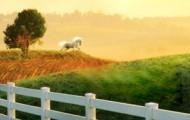 Serie Corazones irlandeses, de Nora Roberts